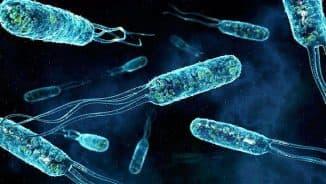 бактерии ангины