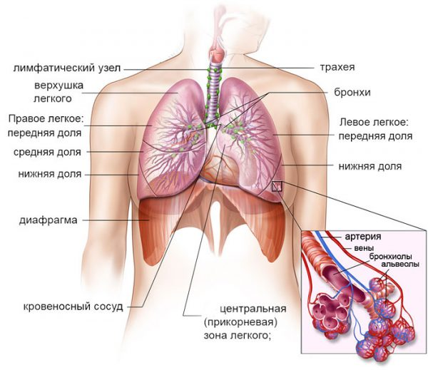 Причины кашля при сердечной недостаточности
