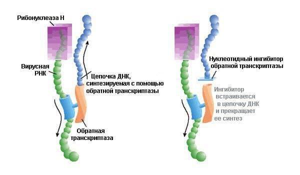 Действие Ацикловира на вирус герпеса