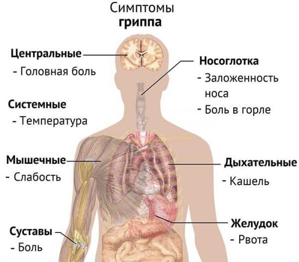 Симптомы гиппа