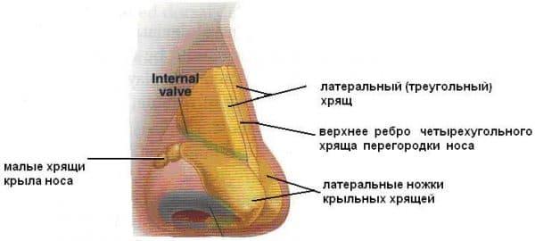 Физиологическое искривление носовой перегородки