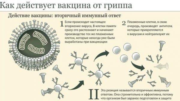 kak-dejstvuet-vakcina-ot-grippa