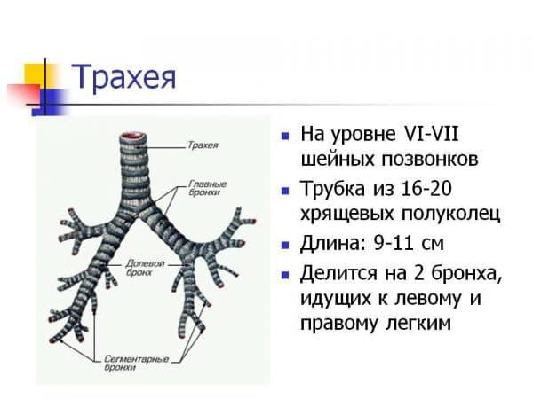 struktura-traxei