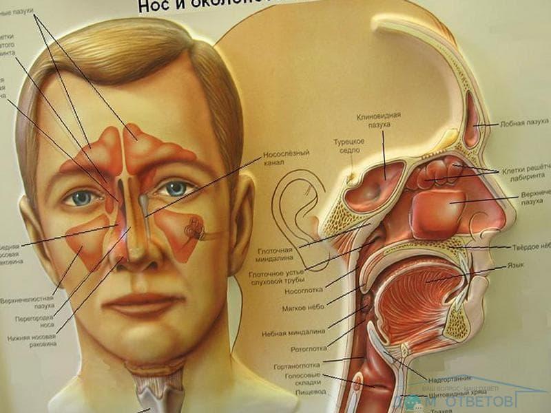 Воспаление ячеек решетчатой кости
