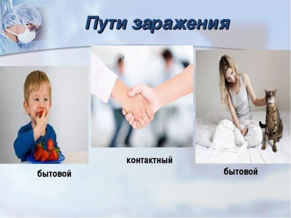 Контактно-бытовой путь заражения инфекцией