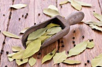 lavrovyj-list-v-narodnoj-medicine