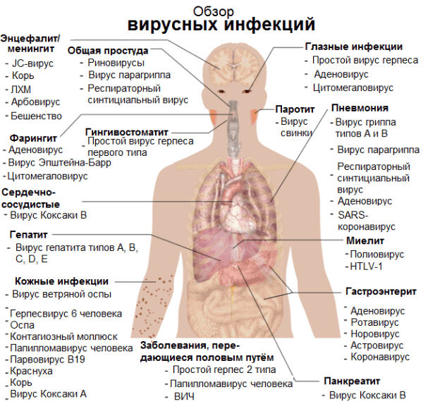 obzor-virusnyx-infekcij