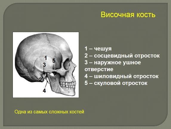 сосцевидный отросток височной кости