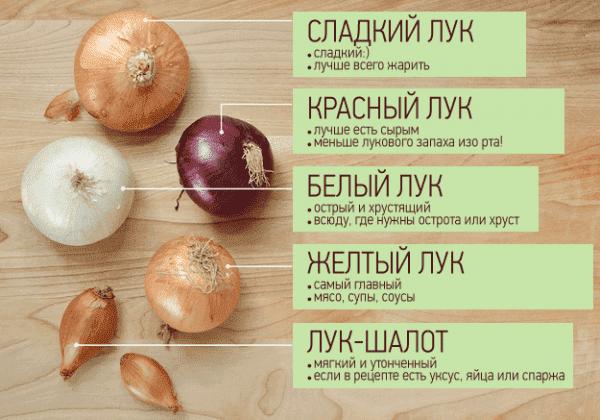 Распростаненность лука и его вкусовые качества