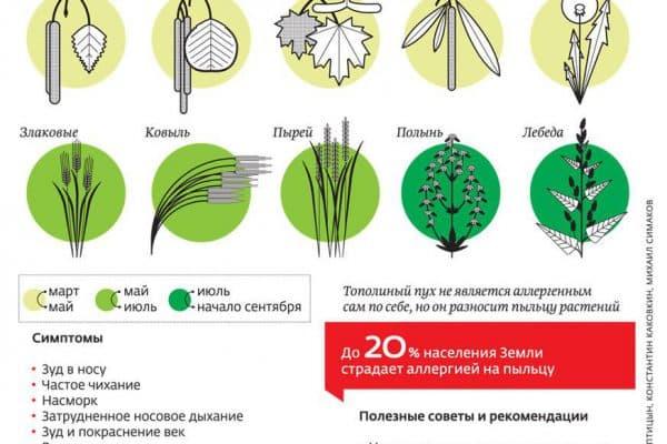 priznaki-allergii-na-pylcu