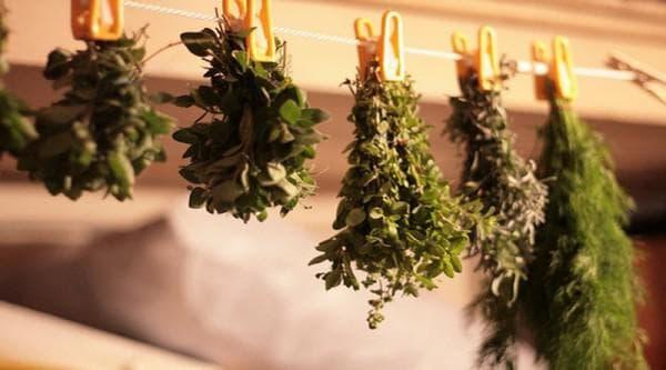 Травы от кашля для детей Здоровье детей Здоровье, тема здоровье, здоровый образ жизни