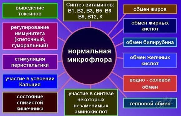 Нормальная микрофлора организма