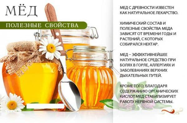 poleznye-svojstva-meda