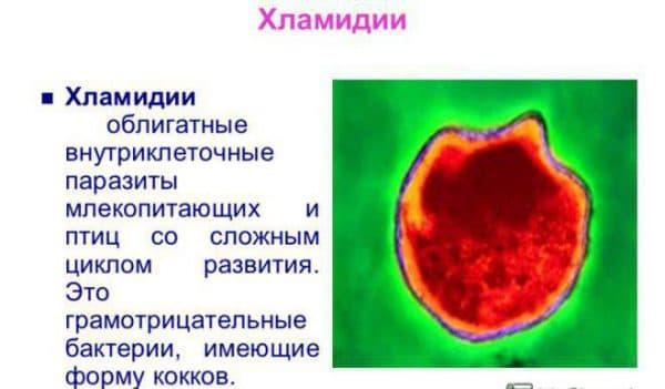 Хламидии как источники возникновения пневмонии