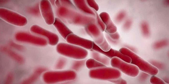 Klebsiella pneumoniae – что это такое бактерия клебсиелла пневмония: симптомы и лечение