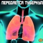 как передается туберкулез от человека к человеку