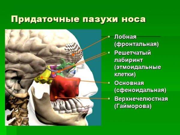 Заболевания придаточных пазух носа характеризуются и называются по локализации воспаления: гайморит - гайморовы пазухи, этмоидит - этмоидальные пазухи и т.д.