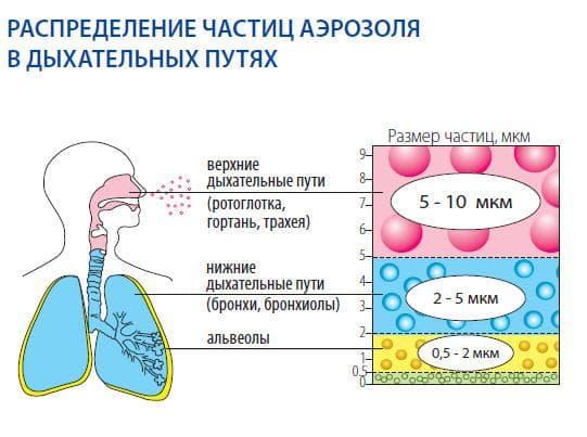 Распределение частиц посредством небулайзера в разных участках дыхательной системы