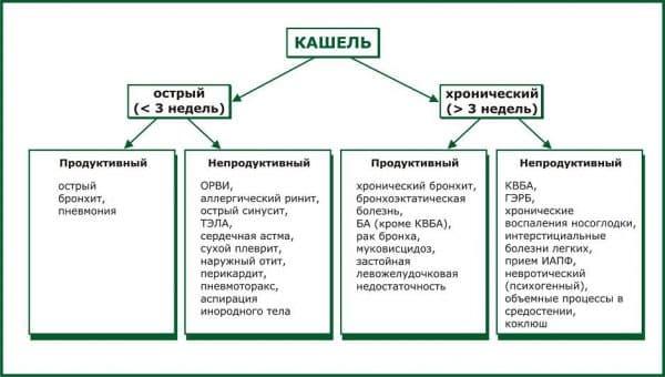 vidy-kashlya