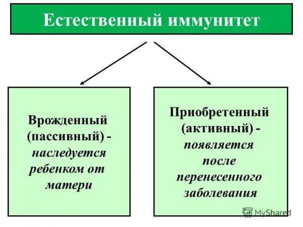 opredelenie-estestvennogo-immuniteta